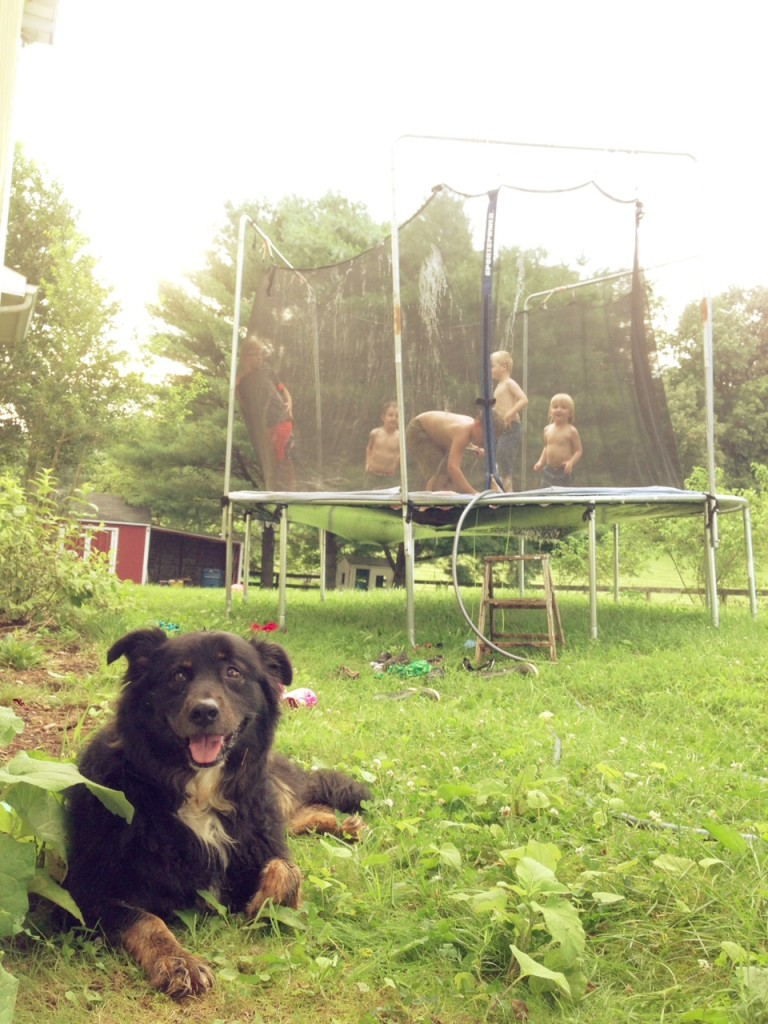 The Dog, The Kids, The Trampoline